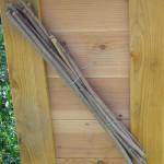 Markhaltige Holunderstengel, schräg angeordnet damit Regen abläuft